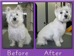 Dog Grooming in Las Vegas