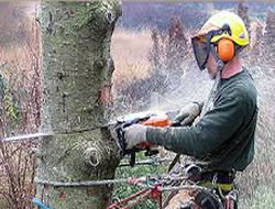 Tree Removal in Las Vegas